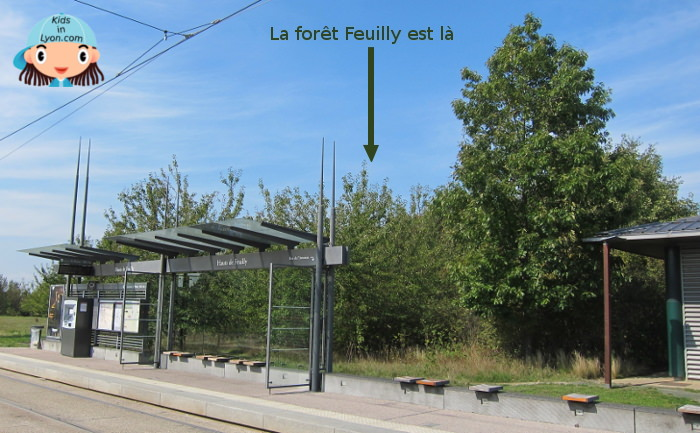 forêt feuilly tramway
